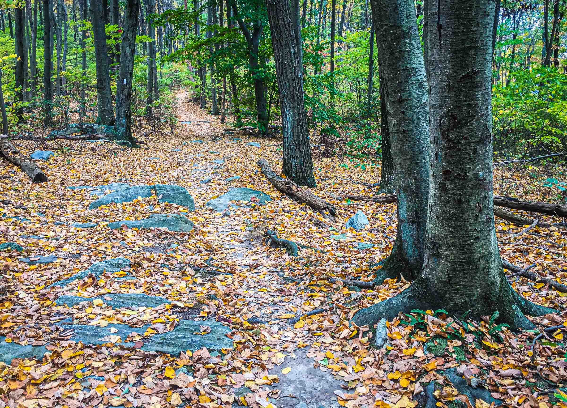 The Appalachian Trail in Maryland
