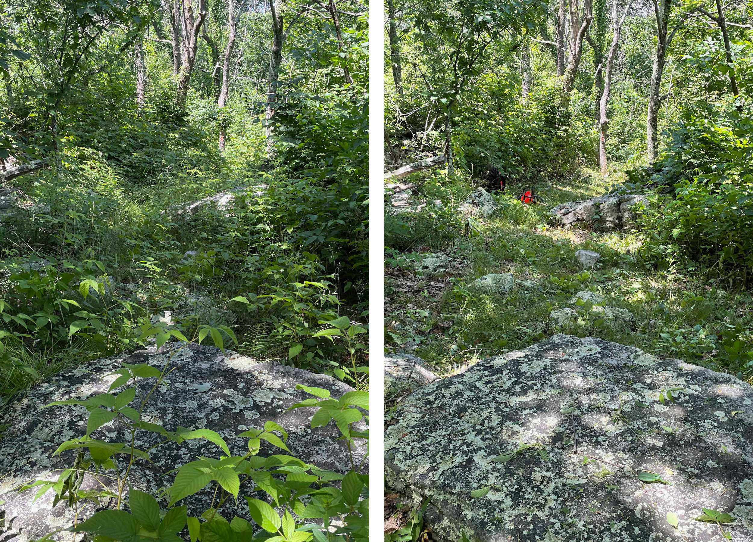 Short Mountain, before and after